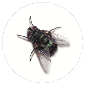 Fly Badge