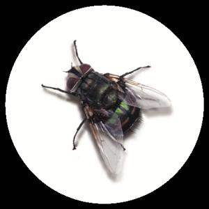 Fly Badge
