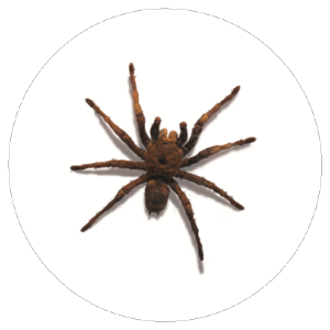 Spider Badge
