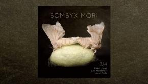 3,14 - Bombyx Mori (314π)