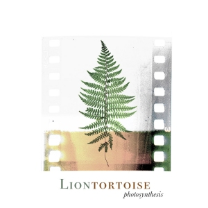 Liontortoise – Photosynthesis